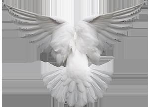 El Espíritu en forma de paloma